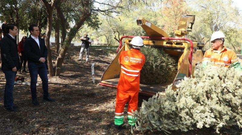 Recolectan más de 5 mil pinos navideños en centros de acopio de Monterrey